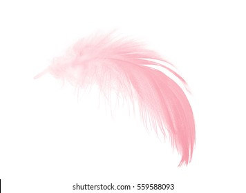 coral pink feather isolated on white background