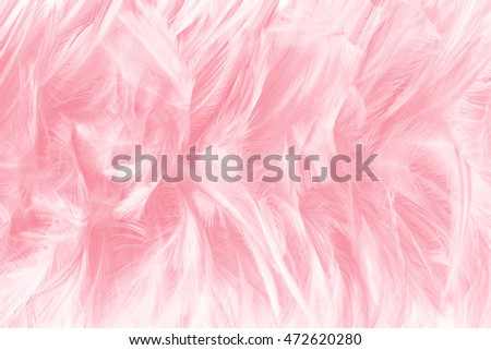 Coral Pink Vintage Color Trends Feather Stockfoto Jetzt Bearbeiten