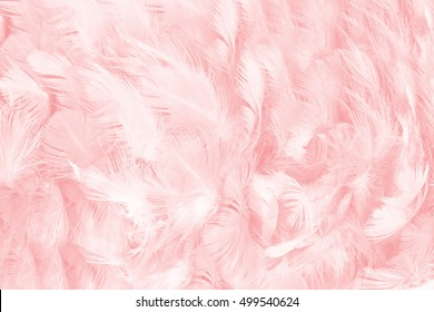 Coral pink vintage,feather pattern texture background,pastel soft fur for baby to sleep. - Shutterstock ID 499540624