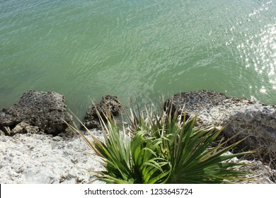 Coral and plant life in foreground on shoreline of Atlantic Ocean in Marathon, Florida Keys. Calm ocean looks green.