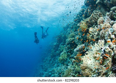 coral reef with anthias and divers in the background