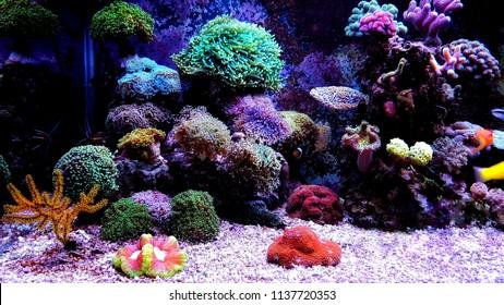 Coral reef aquarium scenic shot