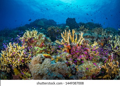 Coral reef bursting with abundant fish life