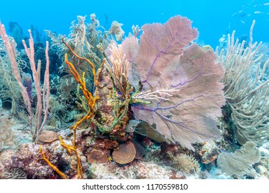 Coral reef in Carbiiean Sea