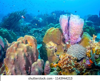 Coral reef in Carbiiean Sea Azure vase sponge