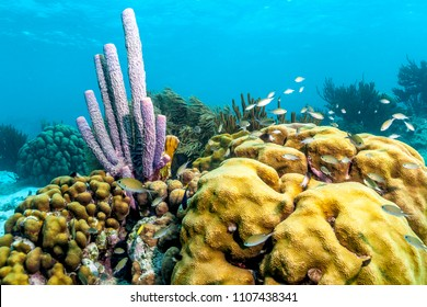 Coral reef in Carbiiean Sea off the coast of the island of Bonaire