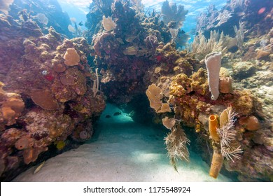 Coral reef in Carbiiean Sea off the coast of Roatan Honduras