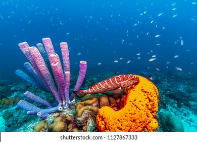 Coral reef in Carbiiean Sea with Stove Pipe Sponge and Orange Elephant Sponge