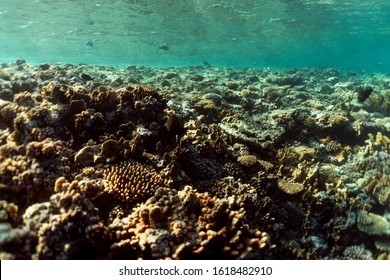 Coral reef close up, coral reef macro photography, underwater coral reef texture, ocean nature close up
