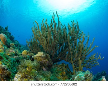 Coral Reef Curacao