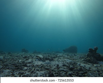 Coral reef damage by global warming/climate change/human.