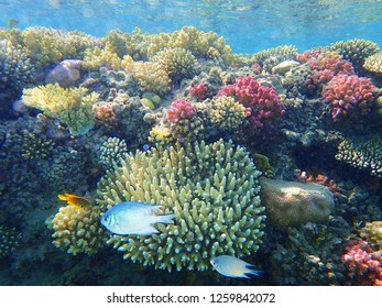 coral reef in egypt as nice natural landscape