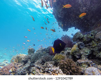 coral reef in eilat and Egypt 2018 scuba diving ,snorkeling under water, reef and sea animals, colorful fishes and coral in tropical water ,under water landscape, many colorful fishes