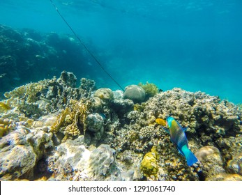 coral reef in eilat and Egypt 2018 scuba diving, snorkeling under water, reef and sea animals, colorful fishes and coral in tropical water ,under water landscape , many colorful fishes sea animals