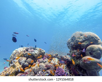 coral reef in eilat and Egypt 2018 scuba diving ,snorkeling under water, reef and sea animals, colorful fishes and coral in tropical water ,under water landscape, many colorful fishes sea animals