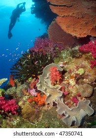 Coral reef in Fiji barrier, (coral colony)
