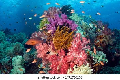Coral Reef Fiji Pacific Panarama