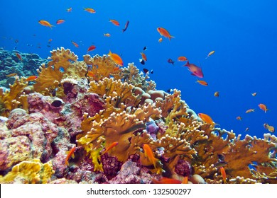 coral reef with fire coral and exotic fishes at the bottom of colorful tropical sea