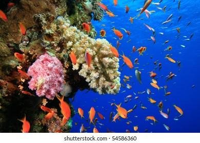 Marine Ecosystem Photos - 106,131 marine Stock Image Results