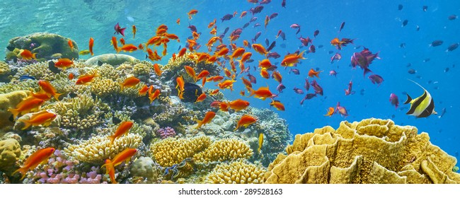 Coral reef and fish, Red Sea, Egypt