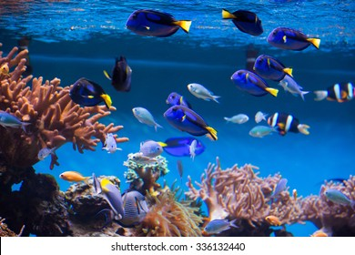 The coral reef fishes in aquarium environment