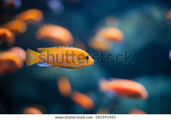coral reef fishes in the water