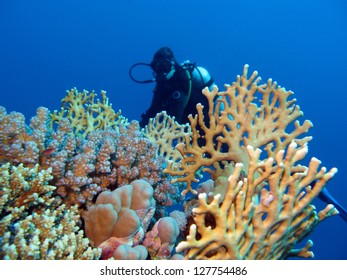 coral reef with girl diver at the bottom of tropical sea