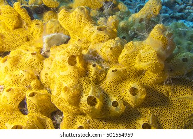 Coral reef with great yellow sea sponge at the bottom of tropical sea on a background of blue water, underwater