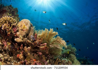 Coral reef in Manado, Indonesia