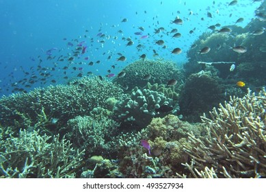 coral reef with many fishes