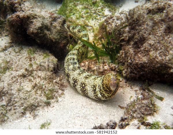 coral reef marine biology moray underwater