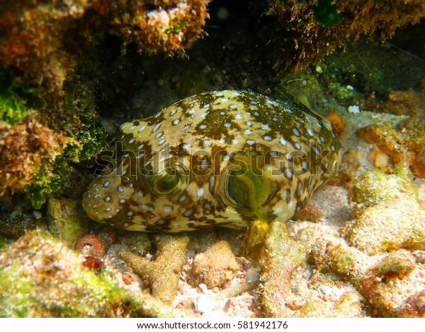 coral reef marine biology underwater