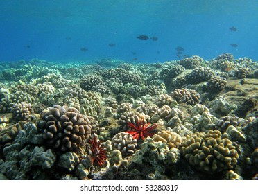 coral reef, maui