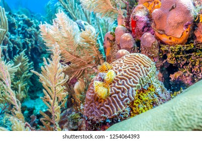 Coral reef off the coast of the island of Roatan