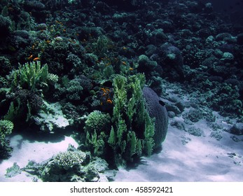 The coral reef on the sand bottom. Underwater paradise for scuba diving, freediving. Red sea, Dahab, Egypt.