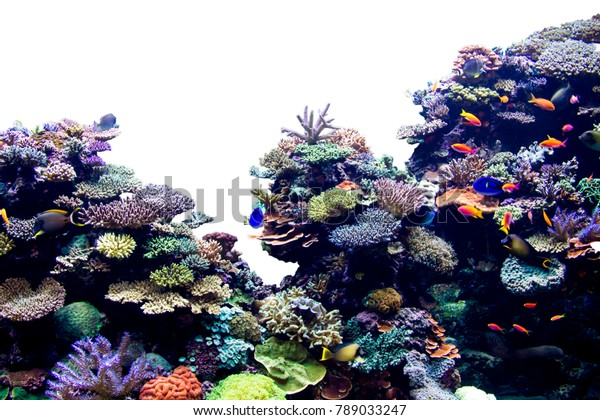 Coral reef on white isolated background