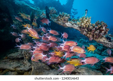 Coral Reef Red Sea North 32