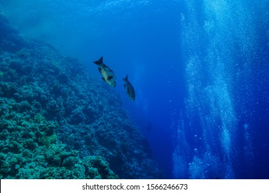 Coral Reef at the Red Sea,Egypt