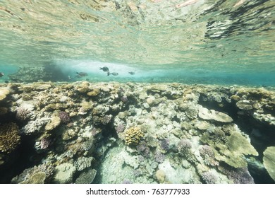 coral reef reflection