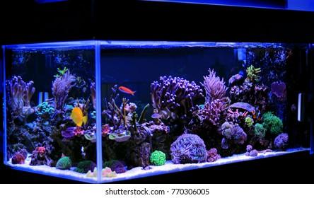 Coral reef saltwater aquarium tank