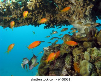 Coral Reef Scene with fish