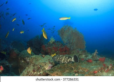 Coral reef scene underwater with manta ray in background