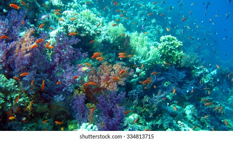 The coral reef scuba diving