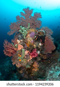 coral reef sea fan