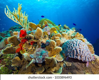 Coral Reef with Sea Fan against Blue Water and Sky