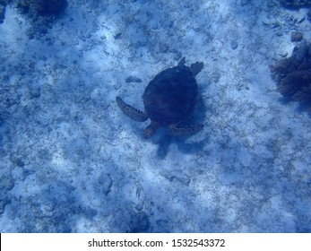 Coral reef and a sea turtle underwater at Balicasag Island Cliff near Panglao, Bohol, Phillipines