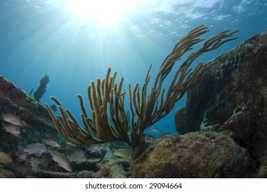 A coral reef seascape with fish seeking shelter under the burst of rays from the sun above the surface, with the calm waves seen in the background.