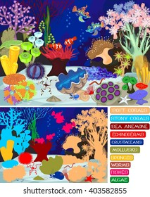 Coral reef with soft and hard corals. Ecosystem