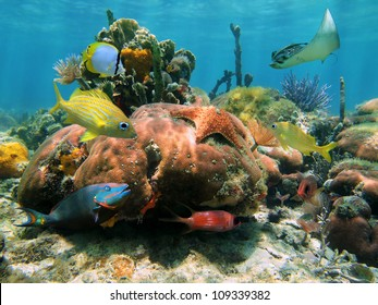 Coral reef with a starfish, a spotted eagle ray and colorful tropical fish, Caribbean sea