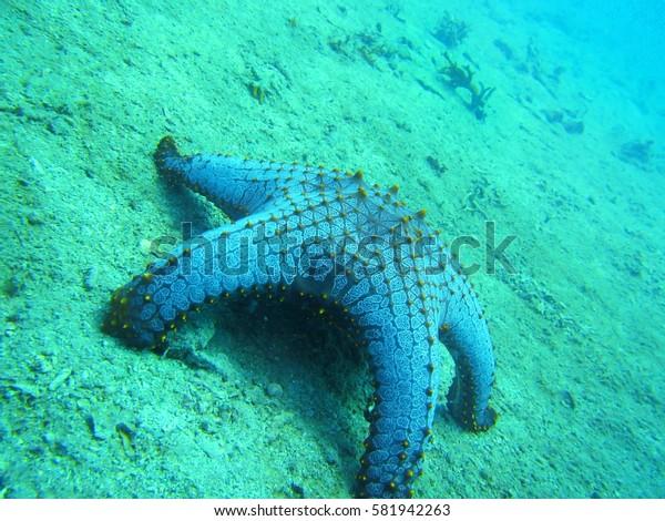 coral reef starfish underwater